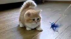Résultats de recherche d'images pour «chats mignon»