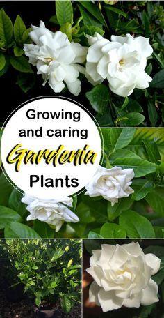 Diy Garden, Terrace Garden, Herb Garden, Vegetable Garden, Garden Plants, Flowering Plants, Garden Mesh, Garden Ideas, Patio Plants