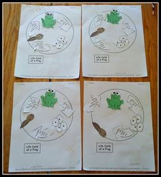 Life cycle of a frog...since we'll be working on life cycles after spring break!