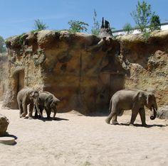 Wohnen im Elefantenhaus | Zoo Heidelberg