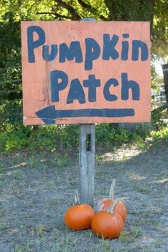 Autumn Fall Halloween Pumpkin Patch Directional Sign with Arrow and Pumpkins. Stock Photo