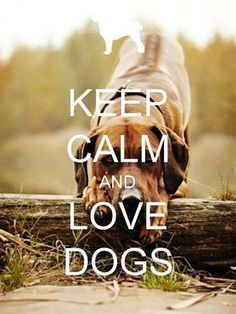 Keep calm and love dogs, Dog quotes