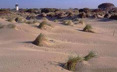 Languedoc: Plage de l'Espiguette, Le Grau du Roi - beautifully wild and empty stretch backed by dunes