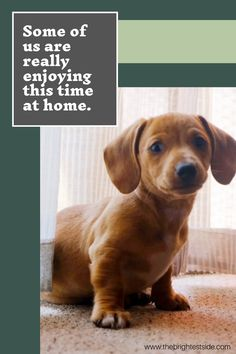 Some of us are really enjoying this time at home. Dog Training Methods, Basic Dog Training, Brain Training, Dog Commands, Pet Dogs, Pets, Separation Anxiety, Le Web, Dog Treats