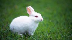دراسه جدوى 100 ارنب - mazra3ty | مزرعتي