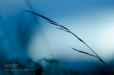 Grass in blue by Borisevich #nature #photooftheday #amazing #picoftheday #sea #underwater
