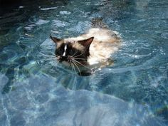 The 10 Most Important Facts About Ragdoll Cat
