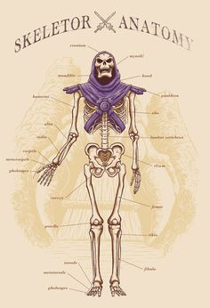 Skeletor Anatomy - MOTU - Adriano Alves