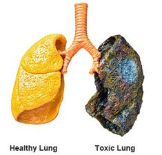 Learn About The Amazing Power of AllerTrex™ for Lung Cleansing and Respiratory Support