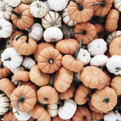 halloween aesthetic - Fall Outfits All Autumn Day, Hello Autumn, Autumn Leaves, Winter, Fallen Leaves, Autumn Harvest, Bild Gold, Hallowen Ideas, Halloween Decorations