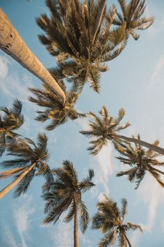 Summer Pictures, Beach Pictures, Aesthetic Backgrounds, Aesthetic Wallpapers, Palm Tree Iphone Wallpaper, Phone Wallpapers, Palm Tree Pictures, Usa Tumblr, Photo Wall Collage