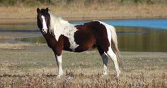 Miracle Man.  Homozygous tobiano (based on produce record).