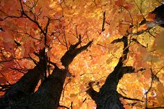 """Golden Orange"" by Abby Herberger"