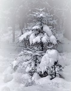 """Winter *❄️~*.Wishes & Dreams.*~❄️* """"Sunshine cannot bleach the snow, nor time unmake what poets know."""" Ralph Waldo Emerson"""