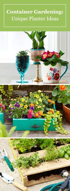 Our guide to DIY container gardening for beginners is full of ideas for unique pots and planters. Get creative with items like teacups, wood pallets, dresser drawers and more.