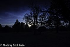 Some pics taken at sunset, in the Arizona forest.
