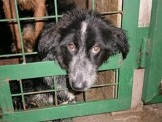 Serbia: PETITION TO CLOSE DOWN THE DOG CONCENTRATION CAMP NOW > https://forcechange.com/123173/save-stray-dogs-from-cruel-shelter/