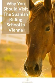 Looking for fun things to do in Vienna, Austria the whole family will love? Visit the #ConcertVienna website and discover why you should visit The Spanish Riding School in Vienna! #Vienna #Austria #Travel #TravelTips #Traveling #TravelGuide #Wanderlust #Europe #Culture