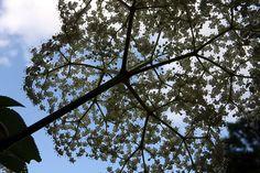 Jpg, Utility Pole, Flowers, Royal Icing Flowers, Flower, Florals, Bloemen, Blossoms