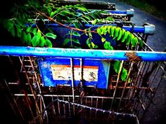 Grocery Cart Graveyard 5x7 Fine Art Print by SnappyChic on Etsy, $12.00