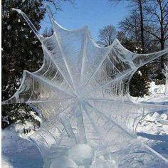 Frozen spider web found in Nantucket, MA.