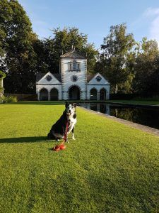 Life As A Collie – Adventures of a Welsh Border Collie