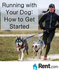 Have you ever thought about running with your dog? Not only is a great way for you to stay motivated to keep up with your fitness routine, but Fido will also get the exercise he needs in the process. While you may think that your furry friend will be ready to jump right in with enthusiasm–and you're probably right–it's important to ease your dog into your running routine to make sure he stays healthy (and can keep up). #Apartment #Rent #Renting #Exercise #Dog #Pets #Running