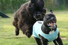 30 уморительных собак, чей нелепый вид рассмешит вас до слёз