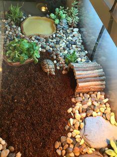 Terrarium pour tortue juvénile