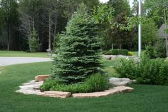 landscaping berms | Portfolio: Lawns, Planting Beds, Berms & Trees in Neenah, Appleton ...