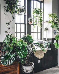 70 Amazing Home Indoor Jungle Decorations Tips and Ideas Decor, Garden Room, House Plants Indoor, Houseplants Decor, Plant Decor, House Plants Decor, Room With Plants, Window Seat, Jungle Decorations
