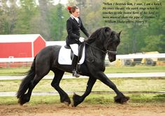 Friesian Stallion Tonjes 459