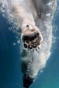 Wow, prachtige foto van een ijsbeer