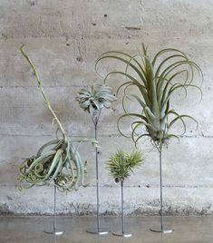 Thigmotrope perches for air plants
