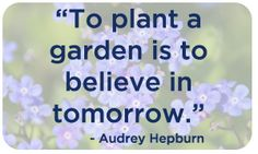 The Alzheimer Society of Ontario's annual campaign - planting forget-me-not seeds to honour those affected by Alzheimer's. Forget Me Not Seeds, Media Campaign, Awareness Campaign, Garden Plants, Planting, Believe, Plants