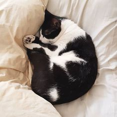 I sleep most of my life and what's better really than sleeping with two pillows? Only perhaps sleeping with my humans. Small Cat, Of My Life, Cats Of Instagram, Boston Terrier, Bean Bag Chair, Sleep, Pillows, Pets, Animals