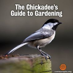 In Your Garden, Choose Plants That Help the Environment! http://www.cornucopia.org/2015/03/the-chickadees-guide-to-gardening #gardening #food #environment The Cornucopia Institute