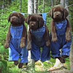 Mascotas: Dogs...