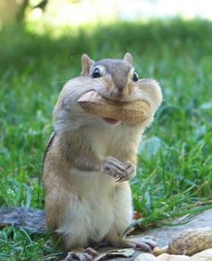 I'd say thanks for the nuts but my mouth is full....