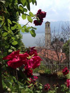 Rose del Lago Maggiore