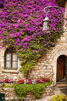 Flowering vines in Eze, Provence France. © Brian Jannsen Photography