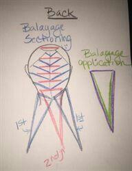 Balayage Sectioning