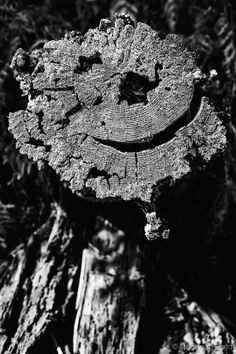 Now, even the nature use smileys by Stéphane Berla on 500px