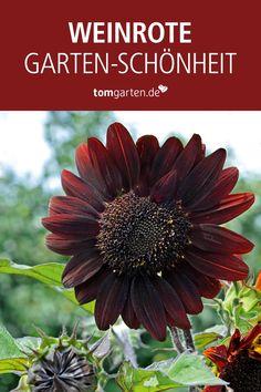 Cut Flowers, Tricks, Flower Power, Garland, Workshop, Bouquet, Plants, Outdoor, Moulin Rouge