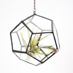 Perfect for a little air plant.