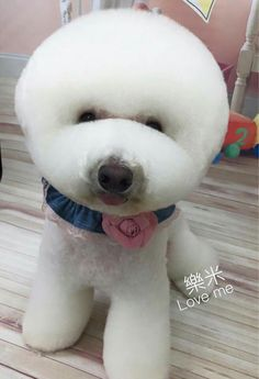 Dog Grooming Styles, Cat Grooming, Cortes Poodle, Cute Puppies, Dogs And Puppies, Pet Dogs, Dog Cat, Poodle Hair, Creative Grooming