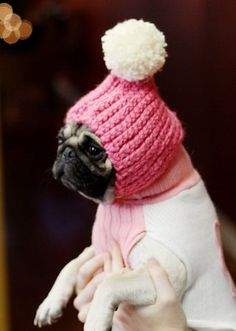 """DIY pom pom snow hat for doggies. Not really """"Miles"""" but I can't resist. (heehee!)"""