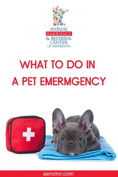 Animal Emergency Referral Center Of Minnesota Aercmn Profile Pinterest