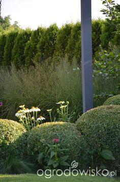Ogród tworzę nowoczesny czyli wewnętrzna walka jak nie zostać kokoszką :) - strona 2601 - Forum ogrodnicze - Ogrodowisko Garden, Plants, House, Garten, Home, Lawn And Garden, Haus, Flora, Gardening