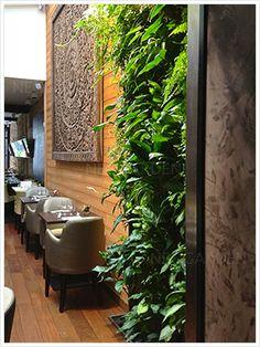 vertical garden in a restaurant Green wall, вертикальный сад, зеленая стена